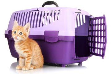 Katzenkauf – Erstattung von Tierarztkosten wegen vorliegender Erkrankung bei Kauf