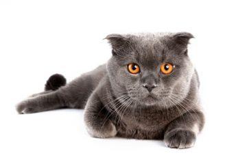 Katzen füttern verboten?