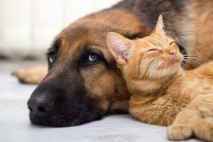 Tierrecht
