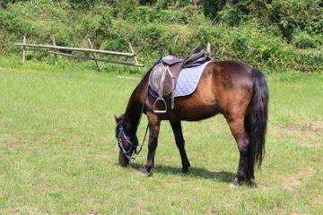 Einschläferung eines Pferdes aufgrund einer Kolik