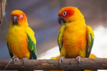 Haltung von Papageienvögeln im Wohngebiet – Genehmigung
