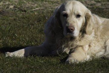 Hündin nebst Welpen aus Hundepension entführt – Schadensersatz und Schmerzensgeld