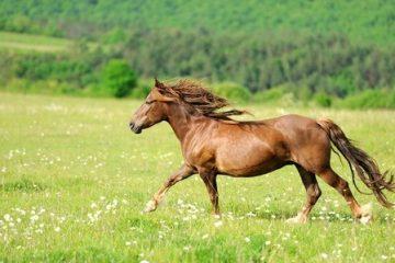 Nicht verladefromm – der misslungene Pferdetransport