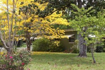 Bäume – Anspruch des Nachbarn auf Rückschnitt