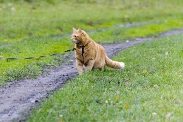 Leinenzwang für Katzen?
