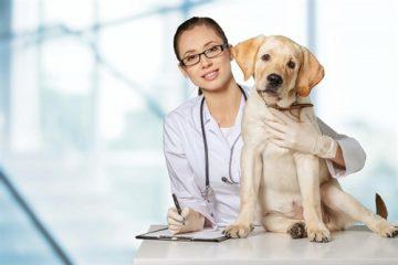 Schadensersatz bei der Verletzung von Tieren