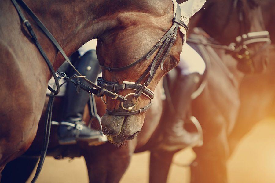Feststellungsklage für Zukunftsschäden aus einem Unfallereignis durch Pferd