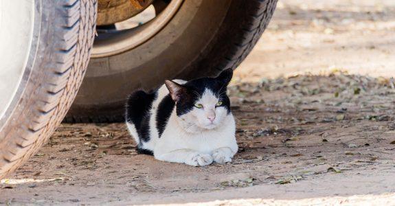Vollkaskoerstattung – bei Motorschaden durch Katze