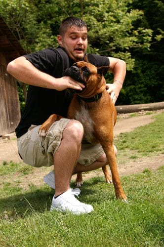 Tierhalterhaftung: Schadensersatz- und Schmerzensgeldanspruch nach einem Hundebiss