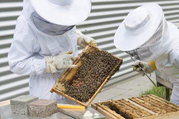 Imkerhaftung wenn Personen von Bienen gestochen werden