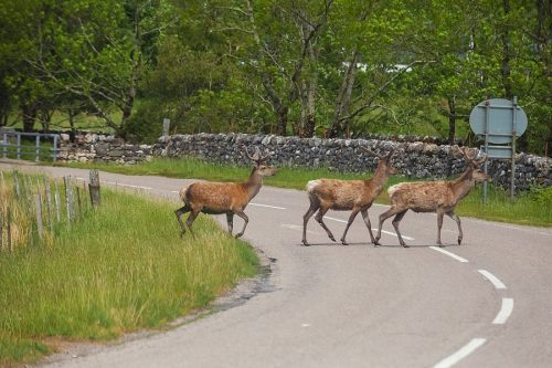 Kaskoversicherung: Nachweis eines Wildschadens bei vorhandenen Vorschäden am Unfallfahrzeug