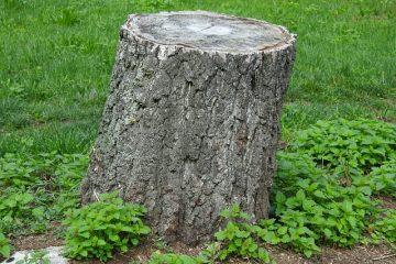 Verkehrssicherungspflicht – Baumstumpf in Grundstückseinfahrt
