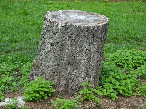 Verkehrssicherungspflicht - Baumstumpf in Grundstückseinfahrt