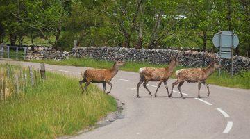 Wildschäden: Einhaltung der Wochenfrist zur Schadensanmeldung