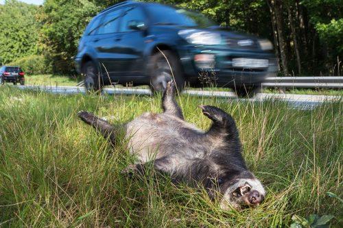 Wildunfall und spätere Kollision eines weiteren Fahrzeug - Haftungsverteilung
