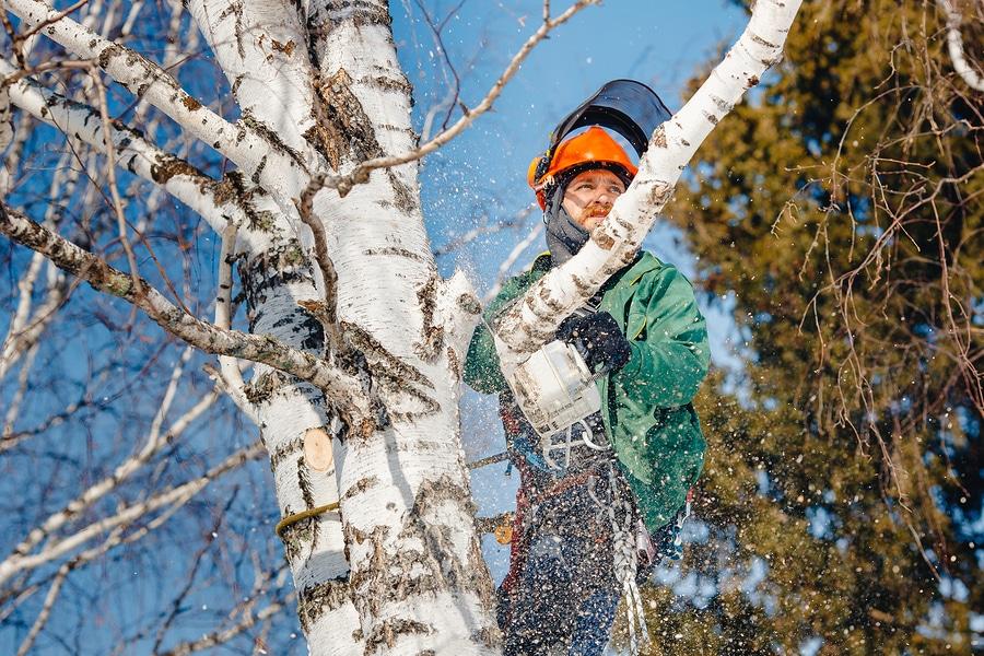 Schadensersatz für durch Nachbarn gefällte Bäume