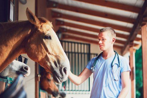 Kaufpreisminderung bei Kauf eines Pferdes mit einer chronischen Erkrankung
