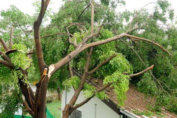 Grundstückseigentümer: Haftung für Schäden durch Astbruch