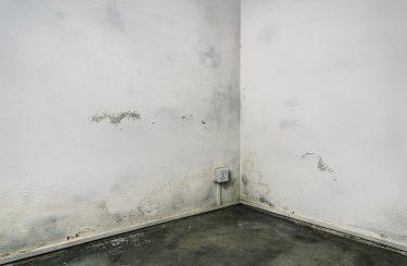 Arglistiges Verschweigen von Feuchtigkeitsschäden beim Hausverkauf – Haftung Hausverkäufer