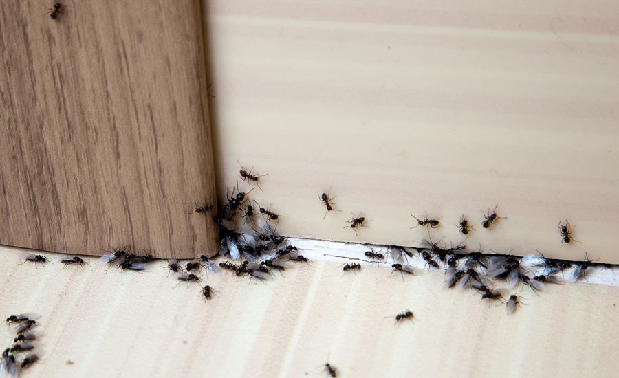Hausverkauf – Gewährleistungsausschluss bei Schädlingsbefall