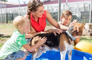 Hundekauf: Rassezugehörigkeit als Beschaffenheitsmerkmal