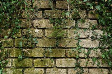Anbringung einer Rankhilfe für Efeu an der Wand des Nachbarhauses – Beseitigungsanspruch