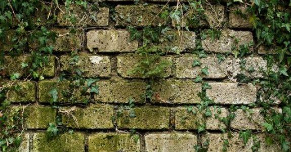Anbringung einer Rankhilfe für Efeu an der Wand des Nachbarhauses - Beseitigungsanspruch