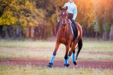 Tierhalterhaftung – unfallursächliches Verschulden des verletzten Tierhalters
