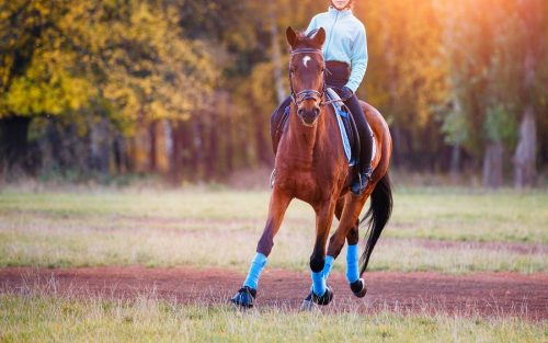 Tierhalterhaftung - unfallursächliches Verschulden des verletzten Tierhalters