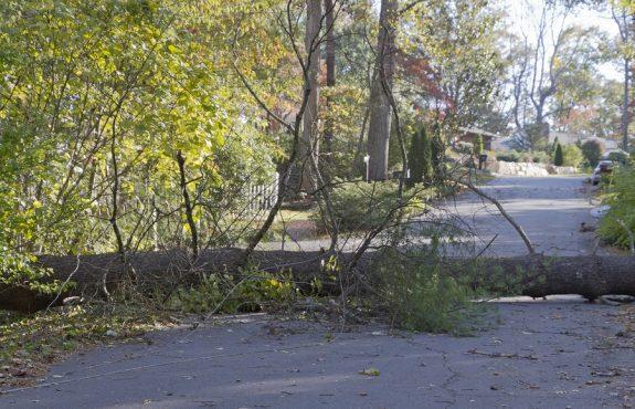 Straßenbaum umgestürzt – Verkehrssicherungspflichtverletzung