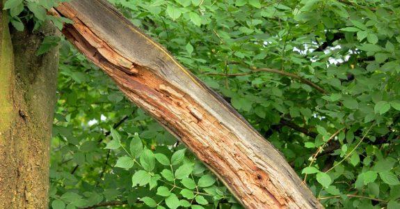 Haftung eines Baumeigentümers für Schäden an einem Privatgrundstück durch abbrechenden Ast