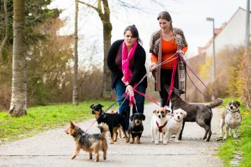 """Erhebung von Hundesteuer – """"Örtlichkeit"""" der Hundesteuer"""