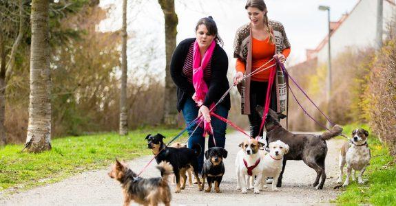 """Erhebung von Hundesteuer - """"Örtlichkeit"""" der Hundesteuer"""