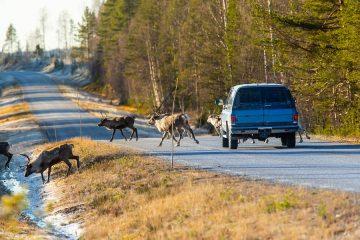 Wildschadenersatzansprüche – Voraussetzungen