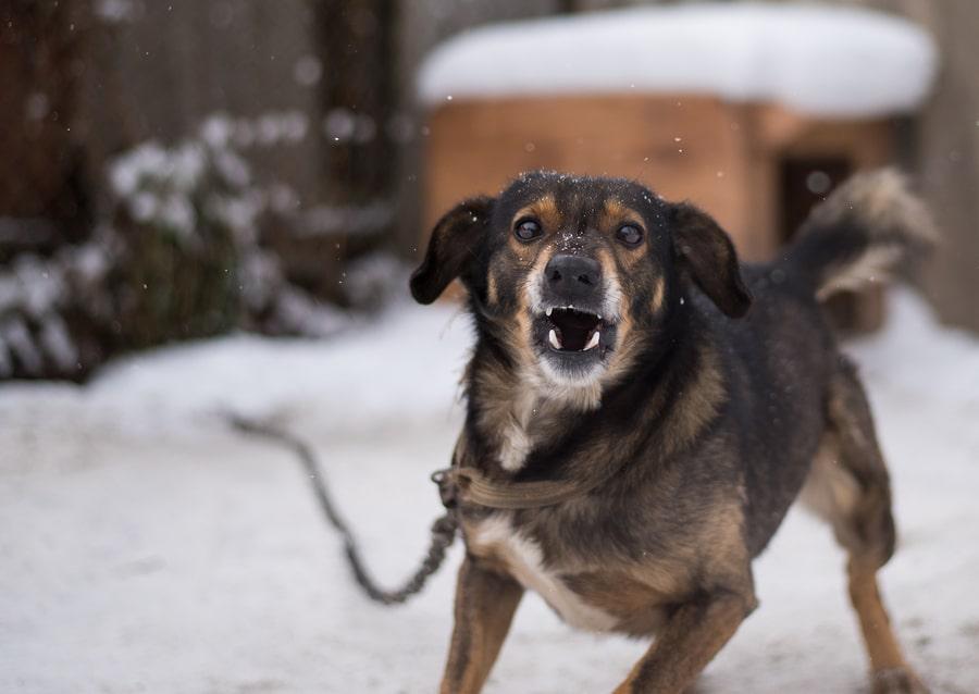 Hundegebell - Unterlassungsanspruch der Nachbarn