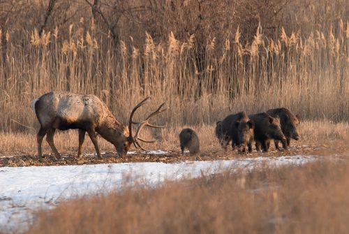 Wildschadensersatz gegenüber Jagdpächter und Jagdgesellschaft