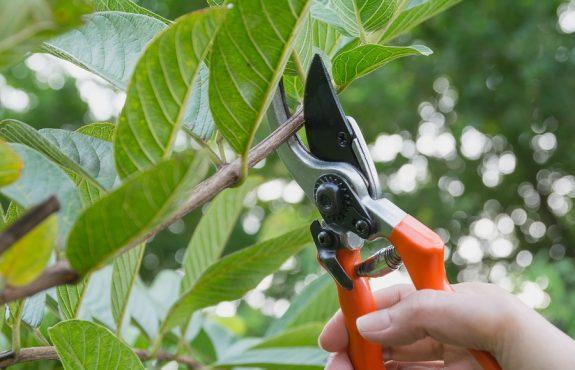Beschneidung alter Nachbarbäume – Vorsicht vor den Folgen