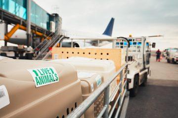 Tierbeförderung in Flugzeug – unangemessene AGB-Klauseln