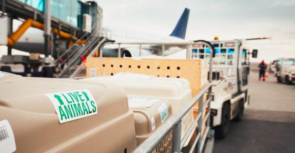 Tierbeförderung in Flugzeug - unangemessene AGB-Klauseln