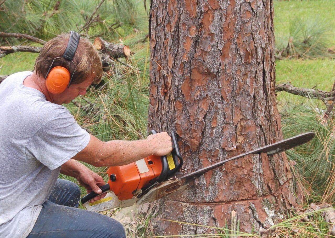 Anspruch auf Erteilung einer Baumfällgenehmigung