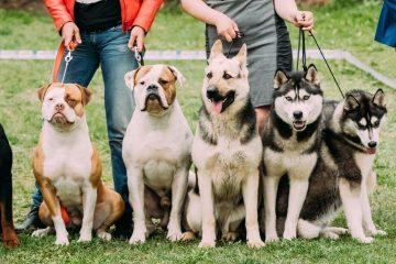 Hundehaltungsuntersagung – Anforderungen an die Feststellung der Unzuverlässigkeit
