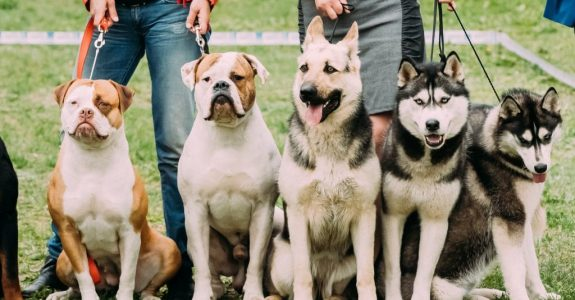 Hundehaltungsuntersagung - Anforderungen an die Feststellung der Unzuverlässigkeit