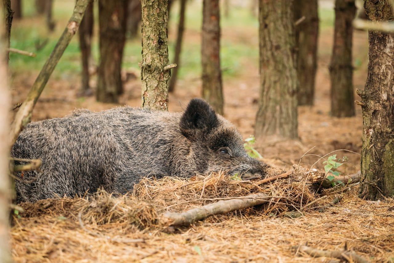 Wildschäden: Darlegungs- und Beweislast für die Schadensverursachung durch Wildscheine