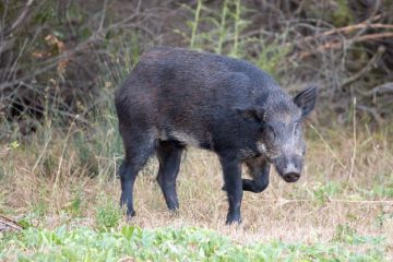Wildschadensersatz: Schadensschätzung bei unmöglicher Schadensfeststellung