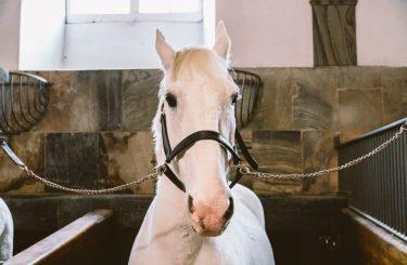 Tierhalterhaftung: Schadensersatzanspruch wegen Verletzung eines Hengstes