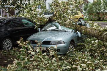 WEG-Haftung für Kraftfahrzeugschaden aufgrund eines bei Sturm umstürzenden Baums