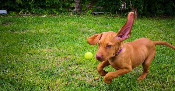 Rücktrittsrecht bei Tierkauf und Nacherfüllung durch Ersatzlieferung