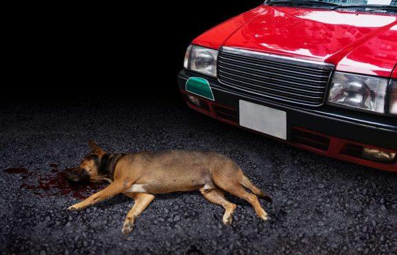 Unfall - Haftungsquote bei Zusammenstoß eines Hundes mit Fahrzeug auf der Straße