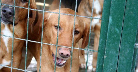 Tierheimhaftung – für zur Probe mit nach Hause genommene Tiere