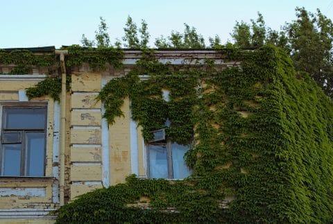 Haftung für Bäume die Dach des Nachbarn verdrecken - Schadensersatz und Reinigungskosten